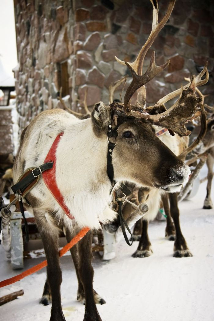 Kids enjoying Santa Claus Village as they spend Christmas in Finland